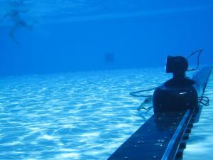 Halibut camera swimming